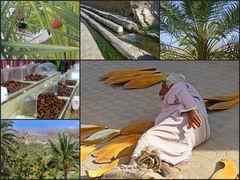 Das Brot der Wüste