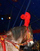 Das Cirkuspferd OTTO bei der Arbeit
