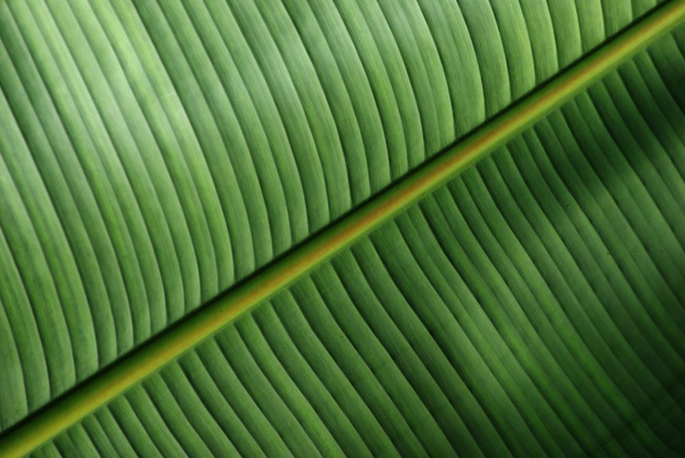 Das diagonale Palmenblatt
