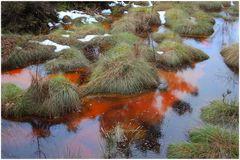 Das dicke Rot im Moor