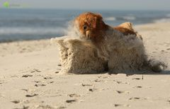 Das Ding aus dem Sand