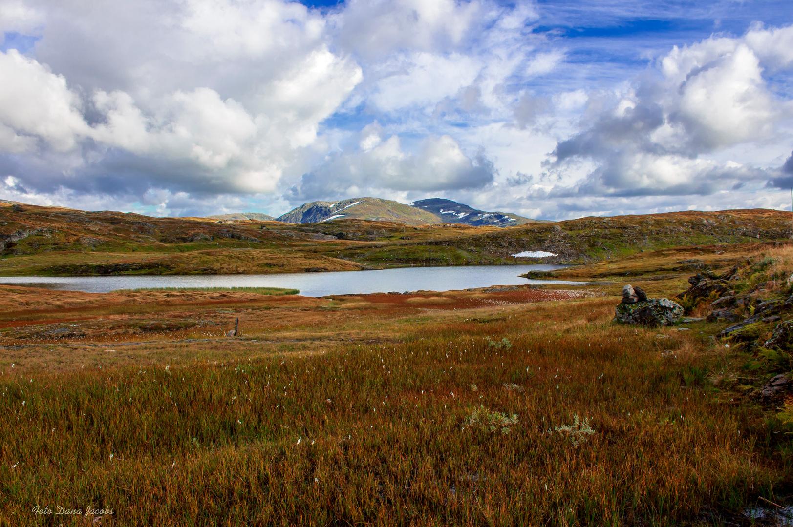 Das Dovrefjell Norwegen