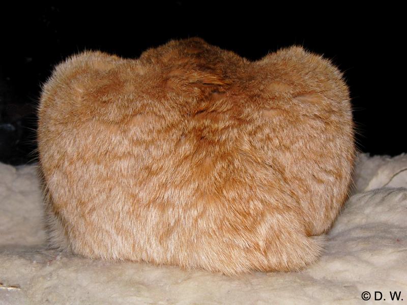 Das dreihöckrige Kamel
