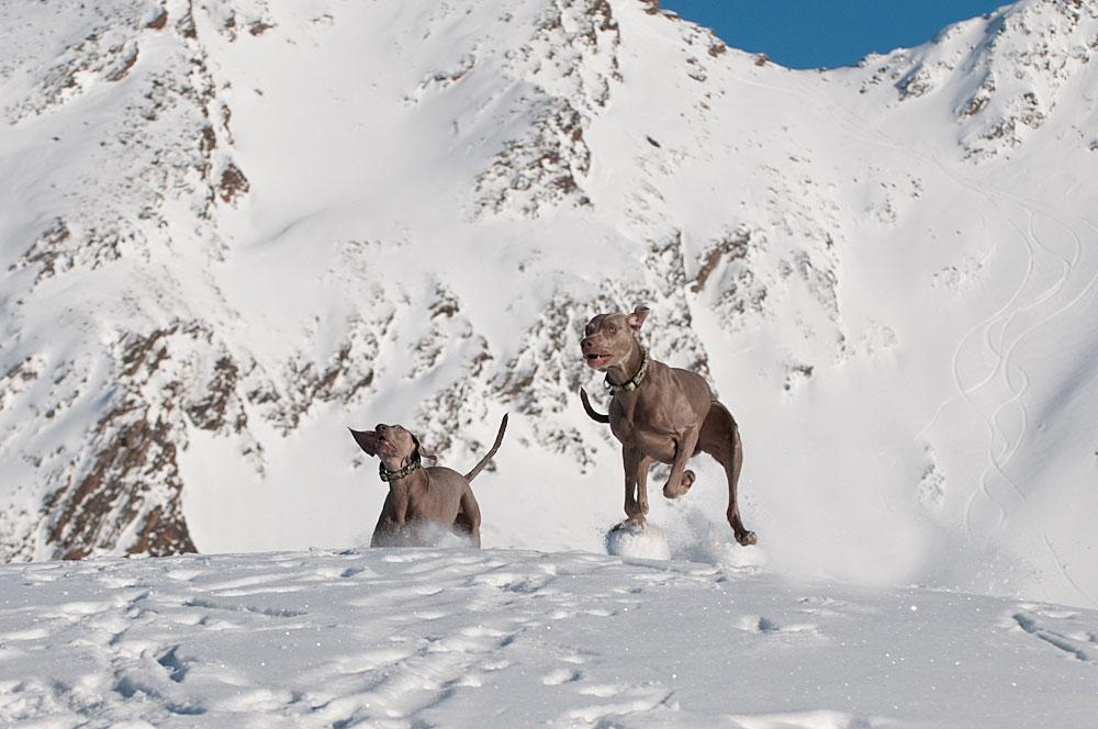 das dynamische Duo mischt den Schnee auf ;-)))