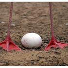 Das Ei des Flamingo