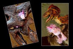 Das Einhorn im naturhistorischen Museum #2