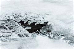 Das Eis  – die Blume ... Frost halt