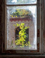 Das Eisblumenfenster