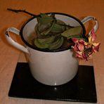 das Ende aller meiner Blumen - Cisciulia war am Werk :-(