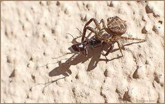 Das Ende einer Ameise...