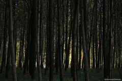 Das Ende vom Düsternwald