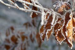 Das erste bisschen Winter