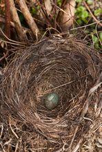 Das erste Ei