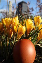 Das erste Ei des Jahres