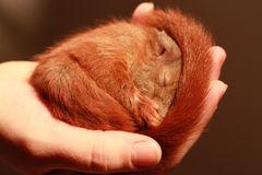 Das erste Hörnchen ...