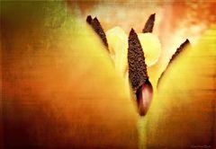 Das etwas andere Tulpen Makro