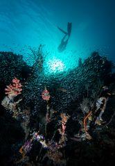 Das etwas andere Unterwasserbild...