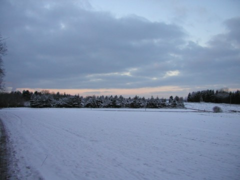 Das Feld im Winter