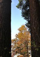 Das Fenster zum Wald 2