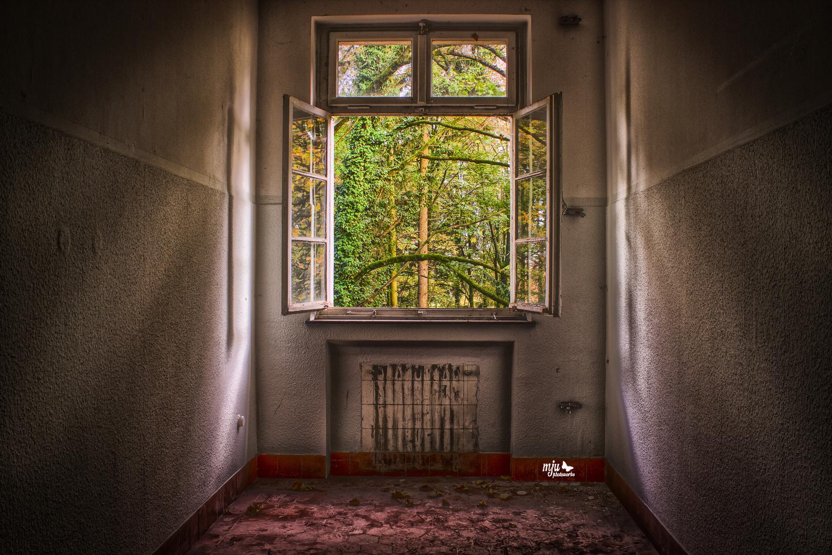 Das Fenster zum Wald