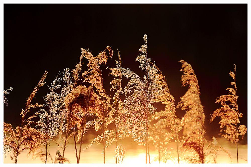 Das Feuer...