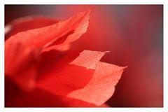 Das Feuer der Liebe.....