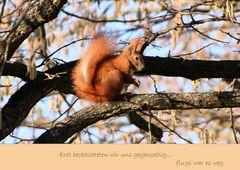 Das flinke Eichhörnchen