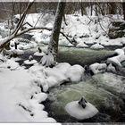 Das Flüsschen Plociczna im Drawienski Nationalpark