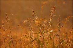 Das Flüstern der Gräser