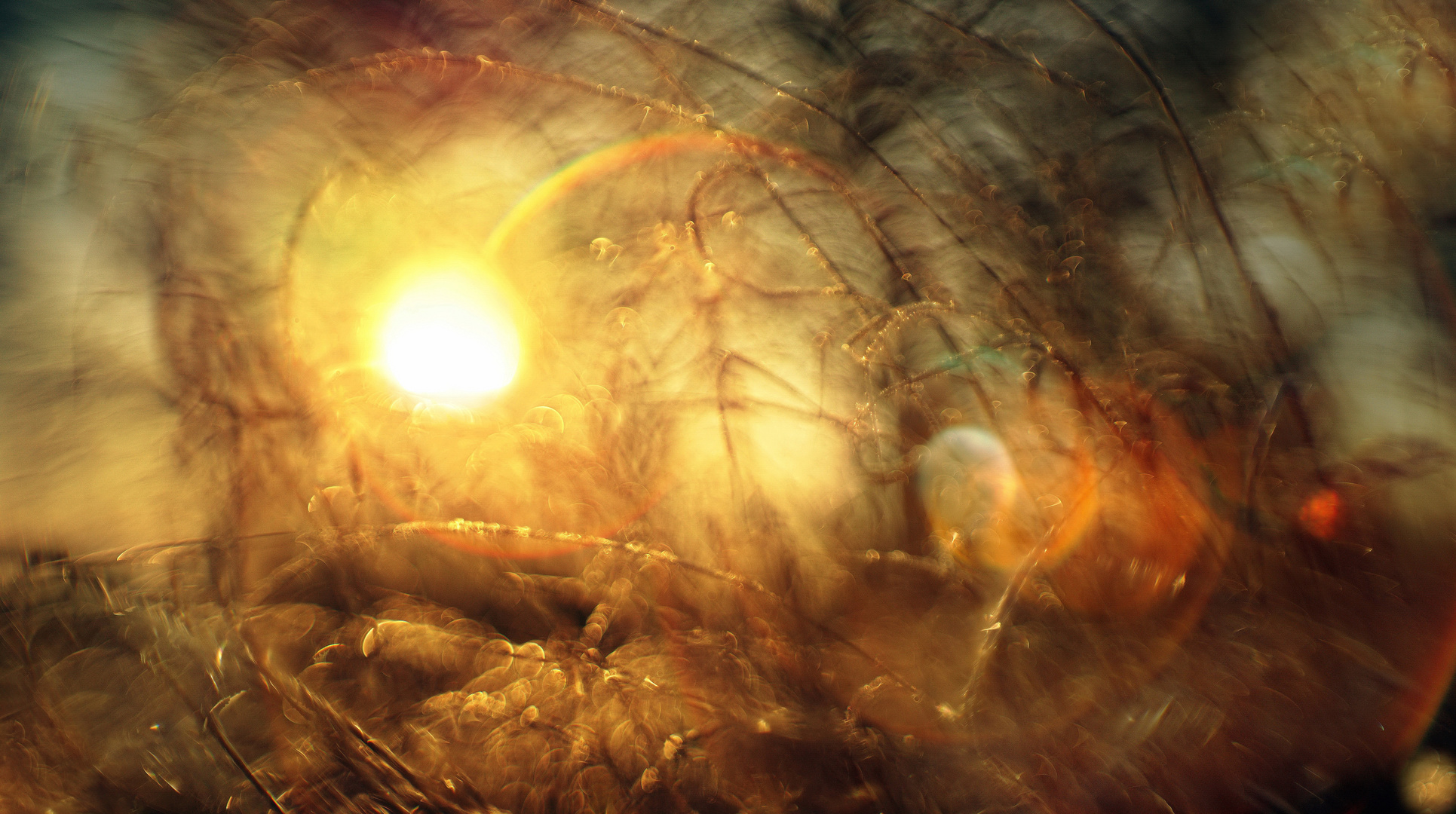 Das frühe Licht an einem frostkalten ersten Frühlingstag