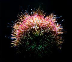 Das ganz  kleine  Feuerwerk
