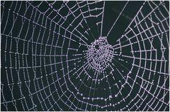 das ganze Netz