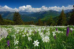Das Gefühl Schweiz zu sein!