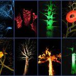 Das geheime Nachtleben der Bäume...