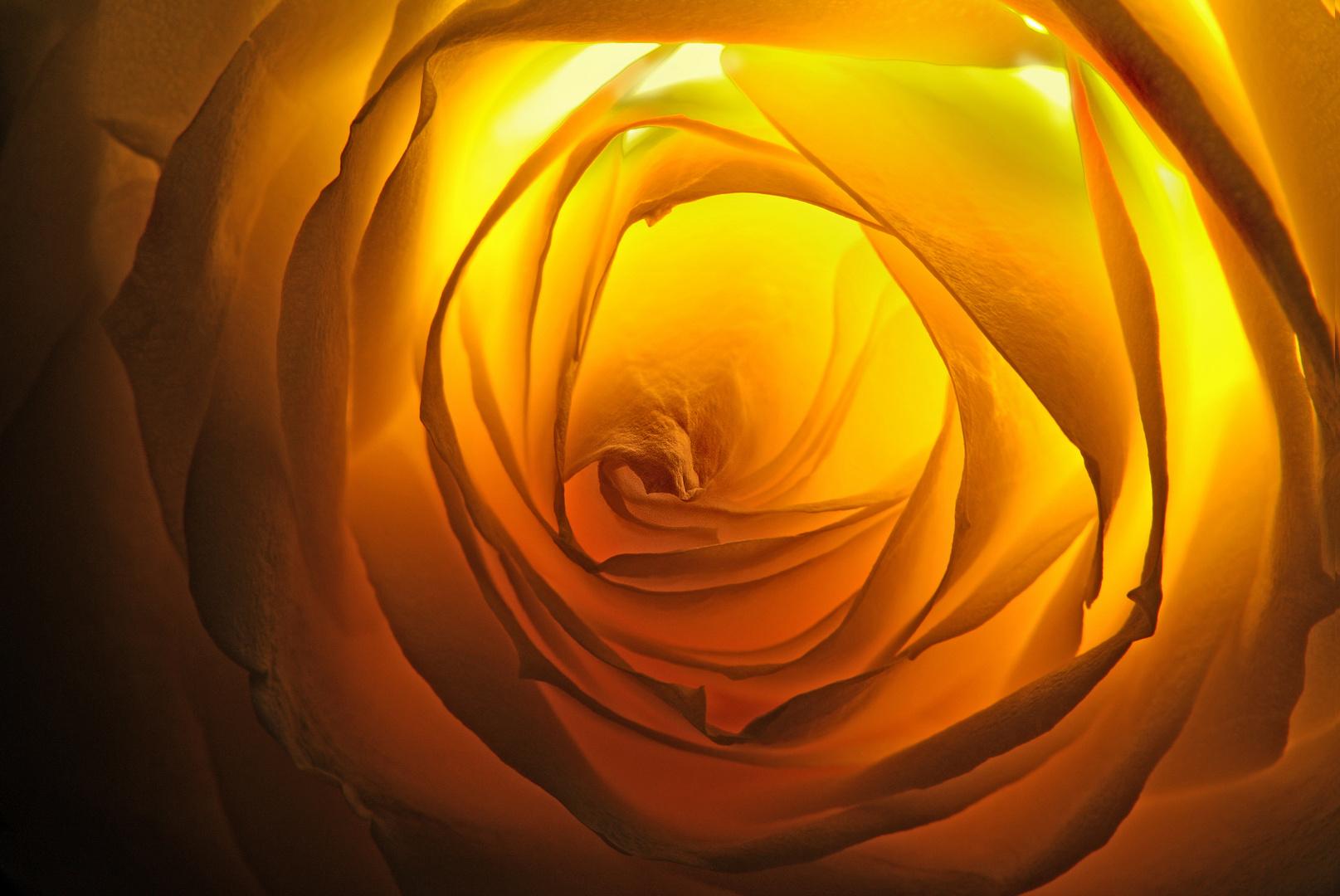 Das Geheimnis der Rose