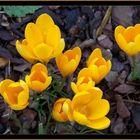 Das Gelb des Jahres