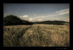- Das Getreidefeld -
