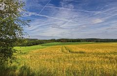 Das Getreidefeld