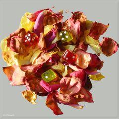 Das Glück ist vergänglich wie eine Rosenblüte ...