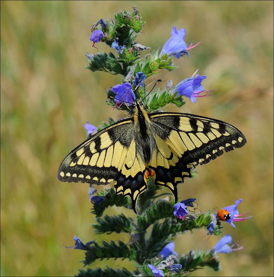 Das Glück und der Schmetterling