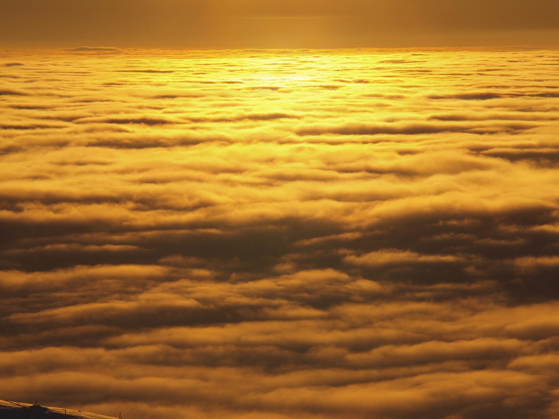 Das goldene Meer