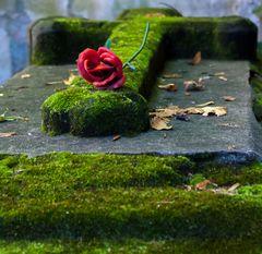 das Grab mit der Rose