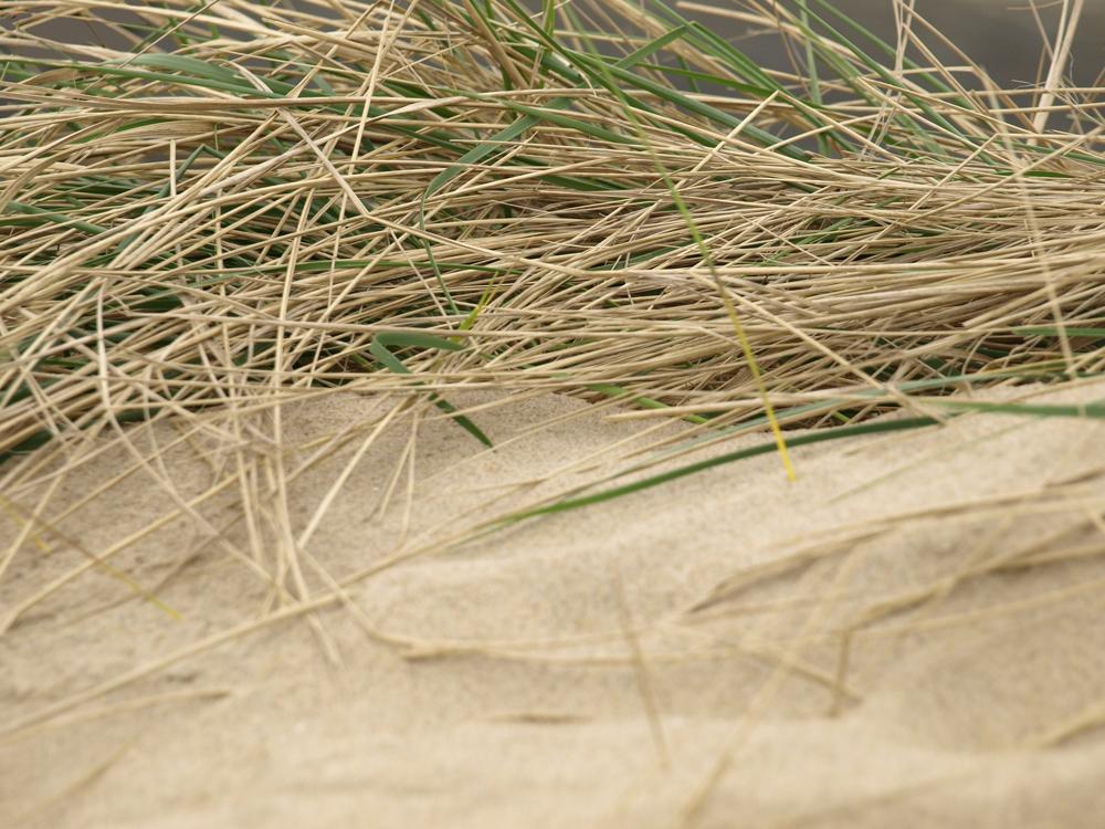 Das Gras im Wind