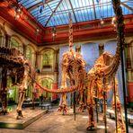 Das größte erhaltene Saurierskelett der Weld