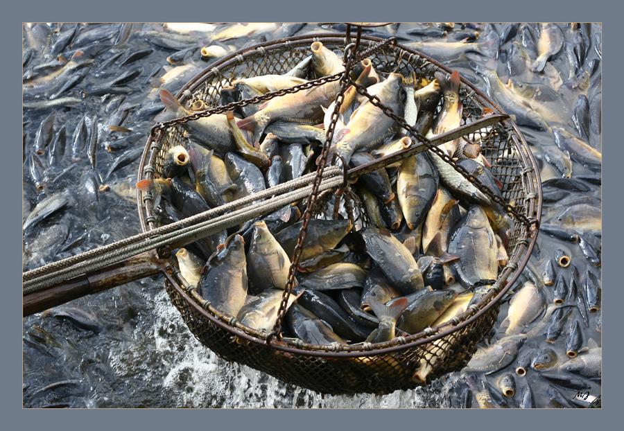 Das große Abfischen
