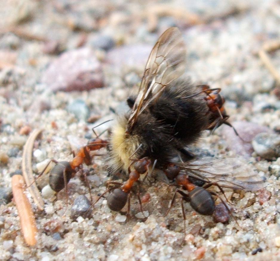 das gro e fressen foto bild tiere wildlife insekten. Black Bedroom Furniture Sets. Home Design Ideas