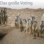 ~ Das große Voting ~