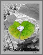 Das grün blaue Herz