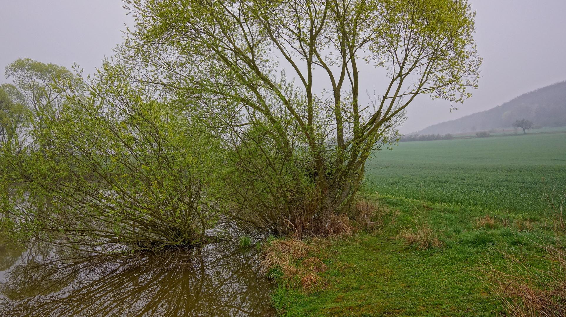 Das Grün des Frühlings I (el verde de la primavera I)