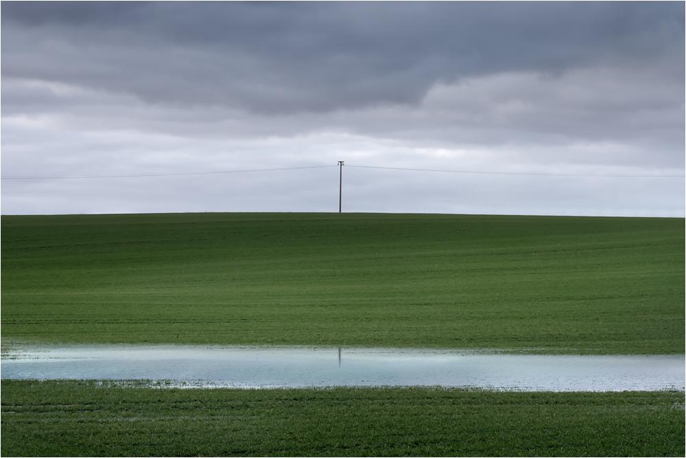 ... das grüne Feld ...